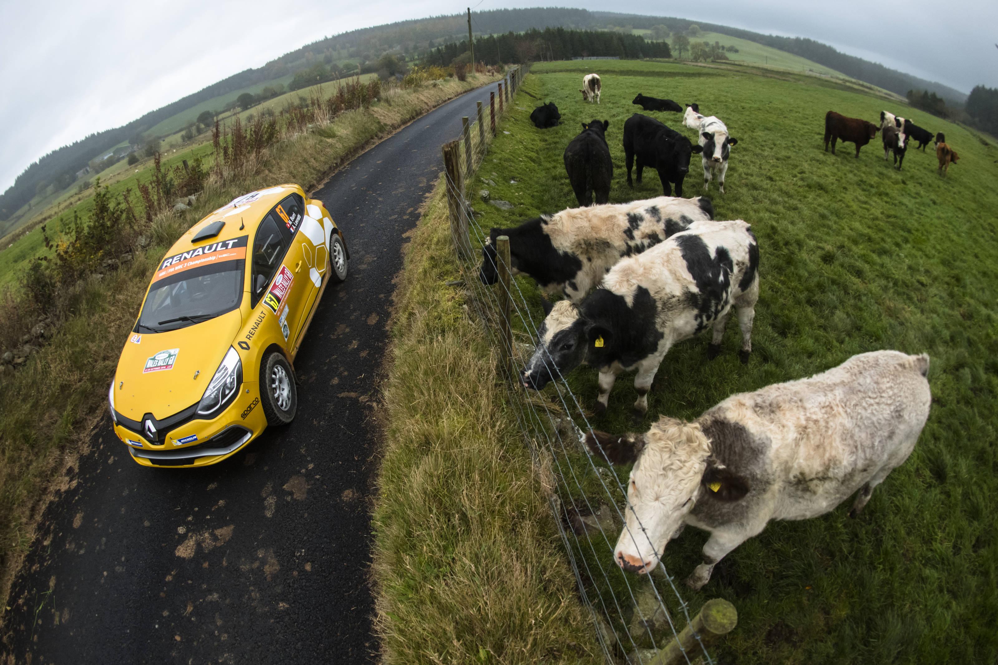 Ο MIchael Burri και οι αγελάδες